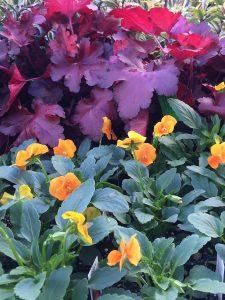 Violas and Dolce Creme Brulee Heuchera