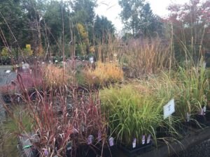 Assorted grasses