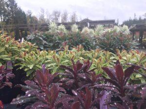 Euphorbia assorted